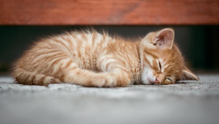 Bien dormir naturellement grace aux huiles essentielles