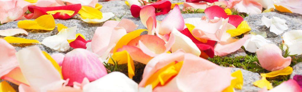 Le Palmarosa : parfum de Rose pour votre bombe de bain