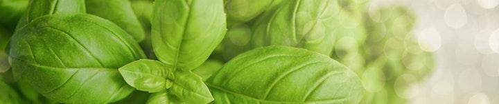 L'huile essentielle de Basilic et le charbon végétal permettent de réduire les diarrhées liées à la gastro