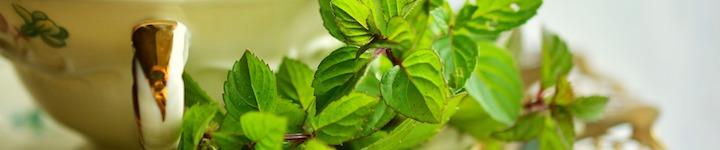 L'huile essentielle de Menthe Poivrée en tisane pour réduire les vomissements