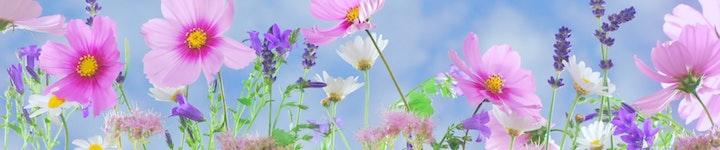 Quelles plantes utiliser pour soulager l'anxiété et l'angoisse ?