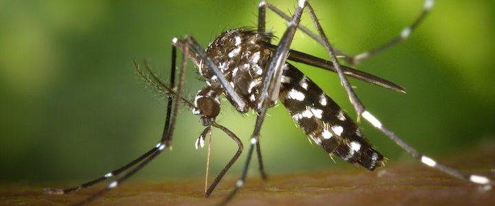 Les remèdes naturels contre les moustiques