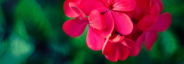 Vous pouvez remplacer le géranium rosat par d'autres huiles essentielles et arômes