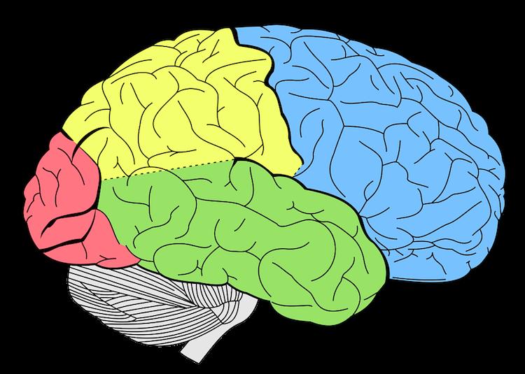 Le fonctionnement du processus de memorisation