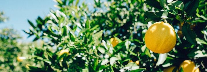 Vinaigrette sans huile, à l'huile essentielle de citron