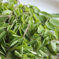 Le Moringa : Bienfaits, Vertus, Origine, Posologie