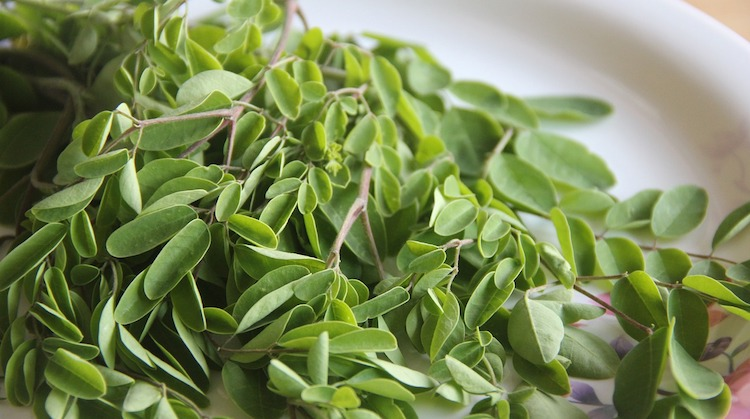 Le moringa est un complément alimentaire contenant la majorité des minéraux et vitamines dont notre organisme a besoin.