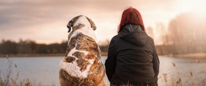 Soigner nos animaux de compagnie avec  la phytothérapie